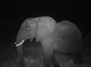 Elephants protected by sensors developed by Maidenhead tech team