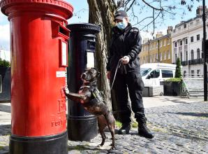 Police dogs searching Windsor ahead of Prince Philip funeral
