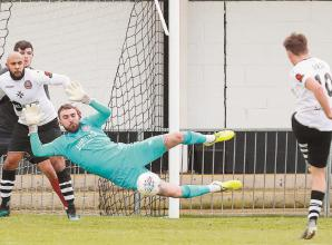 Magpies get stung by high-flying Bees in friendly encounter at York Road