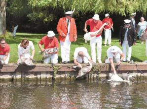 Swan Upping returns to the River Thames after year hiatus