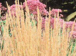 Fill your garden with shades of golden brown this autumn
