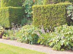 Everything you need to know about planting a hedge